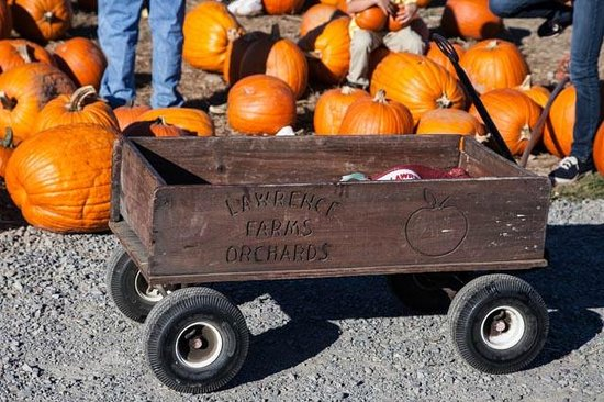 Lawrence Farms Orchards: Wagon