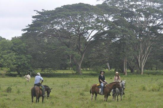 Olingo Surf and Nature Experiences: Horseback Riding at Hacienda Ario