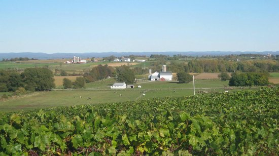 Tug Hill Vineyards: The view overlooking the grapes and the valley