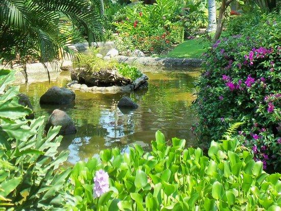 Koi ponds with water lilies foto di velas vallarta for Koi pond traduzione