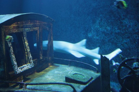 Aquarium de la Réunion : aquarium de saint gilles