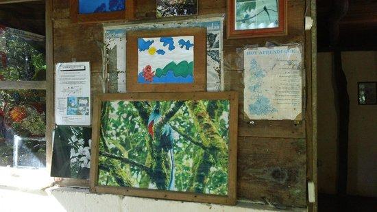 Eco - Hospedaje Ranchitos del Quetzal: Decor