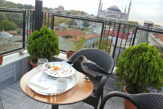 """Agora Life Hotel: breakfast with a """"friend"""" ;) and Hagia Sophia at the background"""