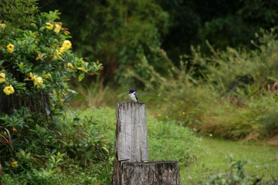 Kingfishers Manor : A Forest Kngfisher in the Grounds