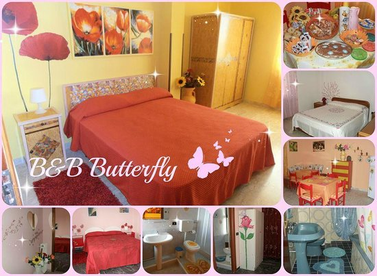 Bed and Breakfast Butterfly: Butterfly