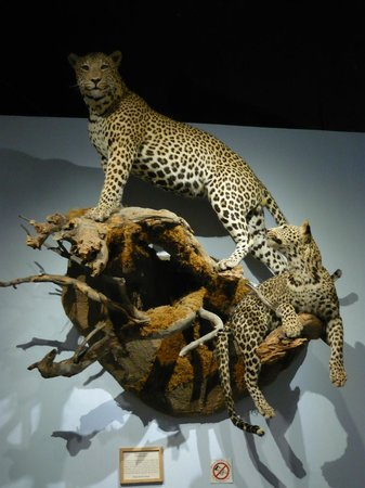 International Wildlife Museum : one of many great displays