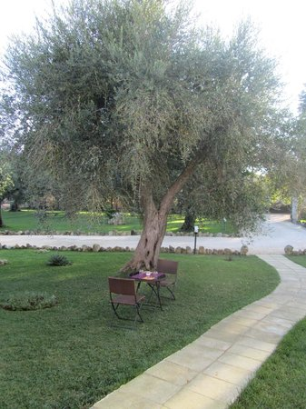 La Zudrea : ulivo