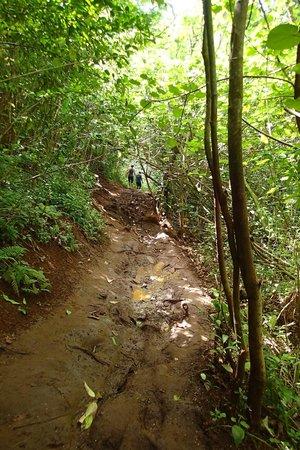 Maunawili Falls: ところどころぬかるみ