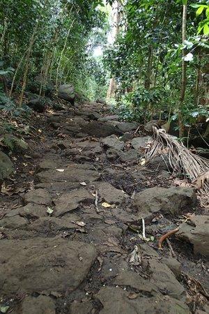 Maunawili Falls: 石畳のように整備されたTrail