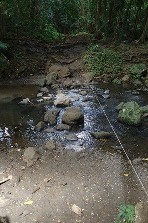 Maunawili Falls: 川渡り(細いロープ有)