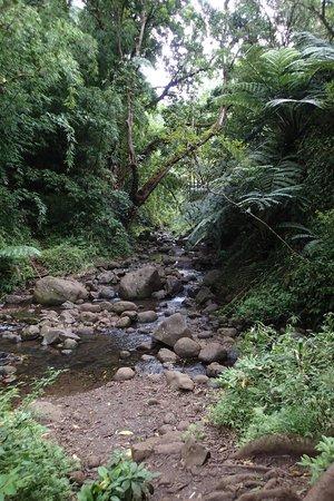 Maunawili Falls: 滝下流のTrail 終点