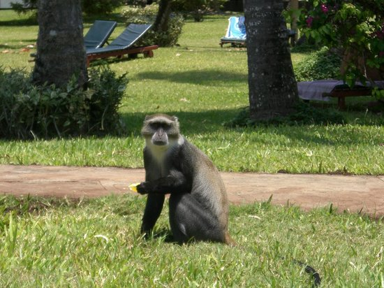 Neptune Village Beach Resort & Spa: Cheeky monkey
