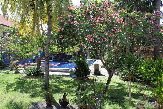 Garden View Resort: View back towards pool