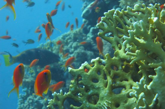 Four Seasons Resort Sharm El Sheikh: Diving from the Four Seasons