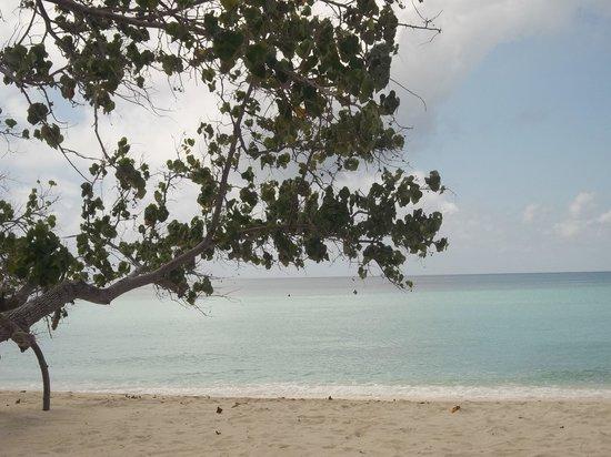 Picnic Inn: Plage de Maafushi