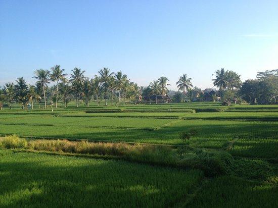 Nirwa Ubud Homestay : vista terrazza