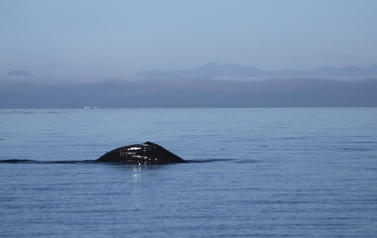 Seasmoke Whale Watching : Humpback whale with BC mountains in the distance