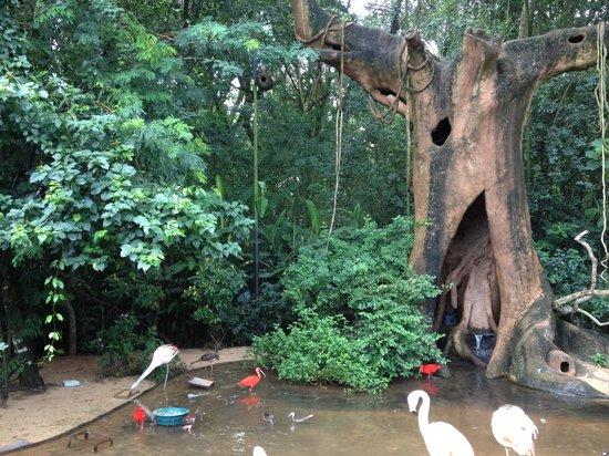 Parque das Aves: Parque da Aves