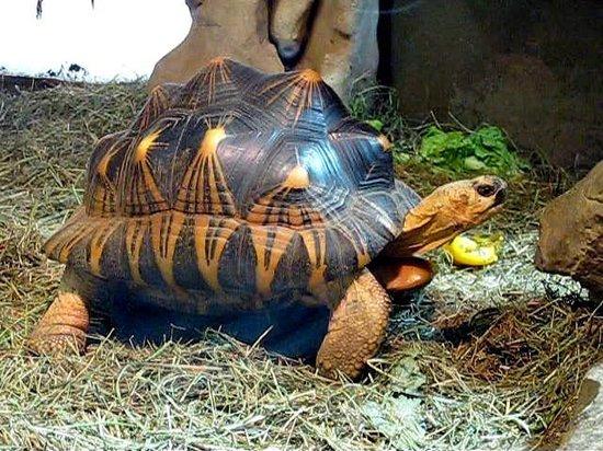 Haus der Natur: Reptilienbereich