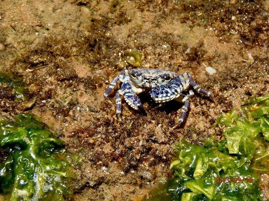 Pousada Farol das Tartarugas: Cangrejo- Playa