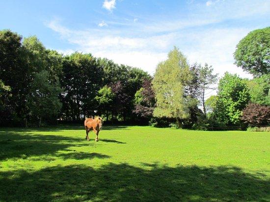Ingouville, France: cheval de la maison