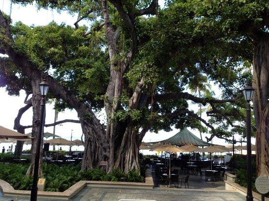 Moana Surfrider, A Westin Resort & Spa: Banyan tree