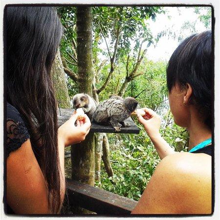 Pousada Lagamar: Alimentando os Micos