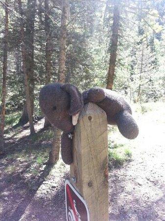 Columbine Trail: ?
