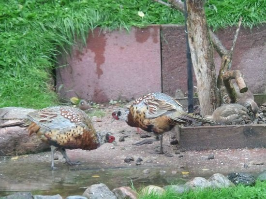 Corrie Liath B & B: Birds in the garden