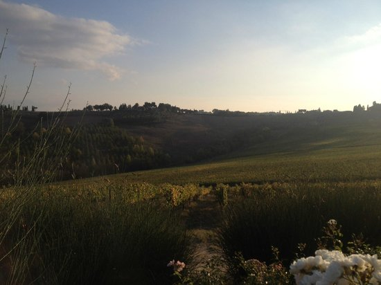 Agriturismo Il Castagno: Surrounding fields