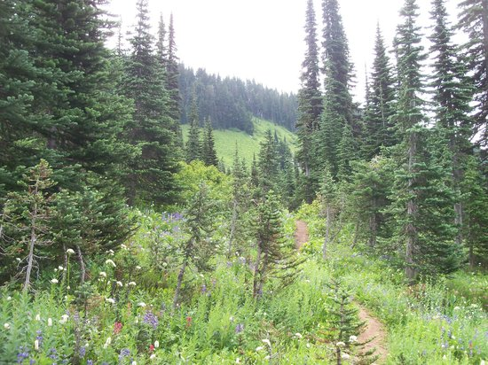 Paradise Inn at Mount Rainier: Mt Rainier, trails near Paradise Inn