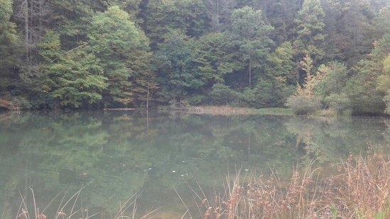 Beagle Ridge Herb Farm: The pond full of fishes!