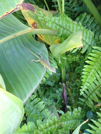 The Palms Retro: Wild life