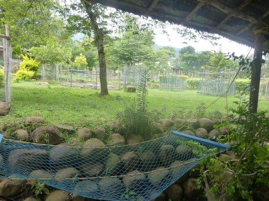 Vue de la chambre picture of bear mountain jungle resort for Chambre jungle