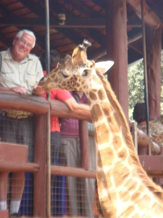 Fairview Hotel: Giraffe Shelter
