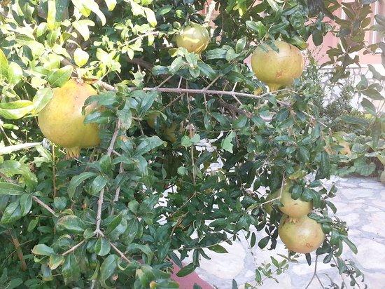 Villa Ozalp: Granaatappels tegenover het huis