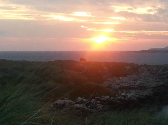 Clifden ecoBeach Camping & Caravanning Park : Cow in sunset