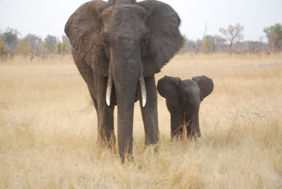 Wilderness Safaris Davison's Camp: Momma and Baby