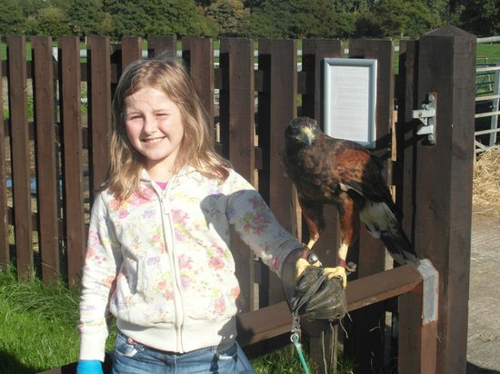 Stockley Farm Birds of Prey Centre: Jasmine and Jasmine the Harris Hawk!