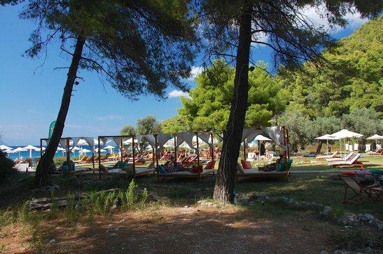 Kastani Beach: Garden area