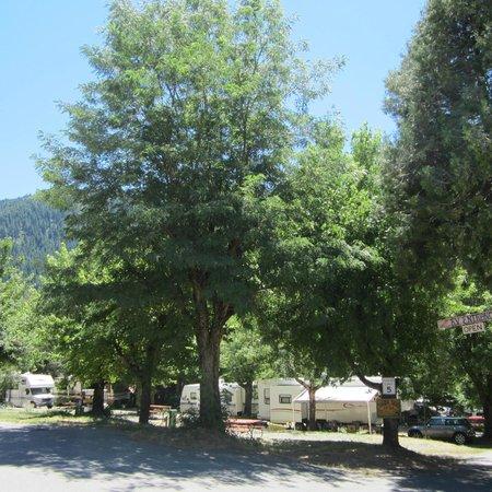 Sierra Skies RV Park: Trees, trees and more trees!