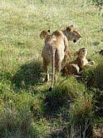 Olakira Camp, Asilia Africa: Cubs