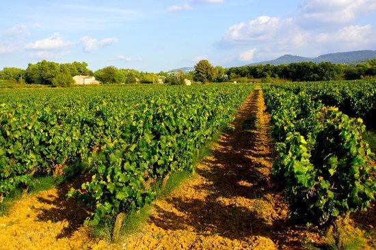 La Coquillade : The surrounding vineyard