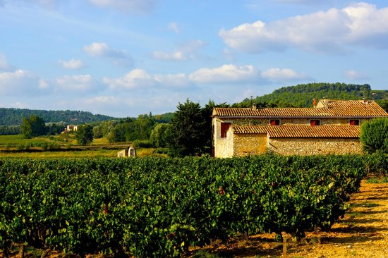 Coquillade Village : The surrounding vineyard