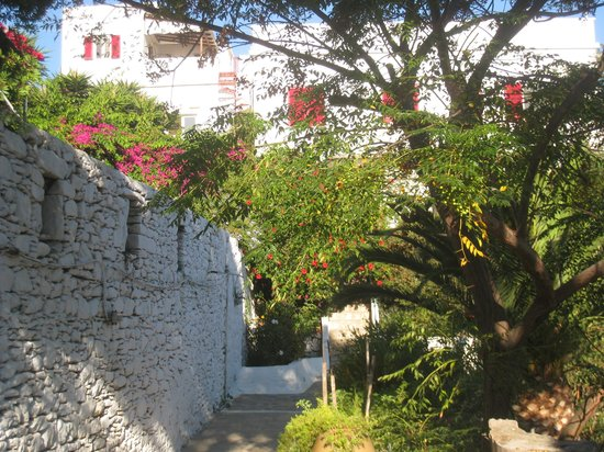 Anna Studios Amorgos: The gardens at Annas