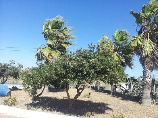 Costa Angela: Widok z tarasu hotelowej tawerny
