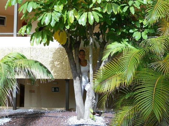 Olé Tropical Tenerife 飯店照片