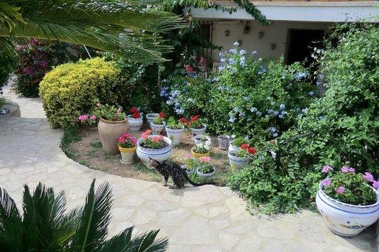 Villa Florencia Casa Rural Gandia: particolare del giardino