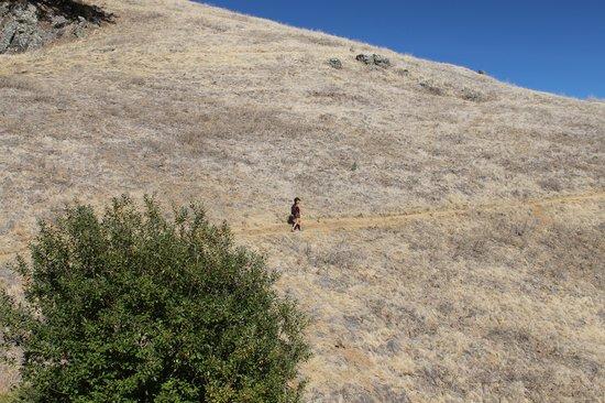 Mount Tamalpais State Park: Hiker's Paradise