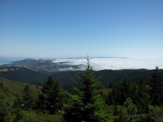 Mount Tamalpais State Park: Rolling Fog